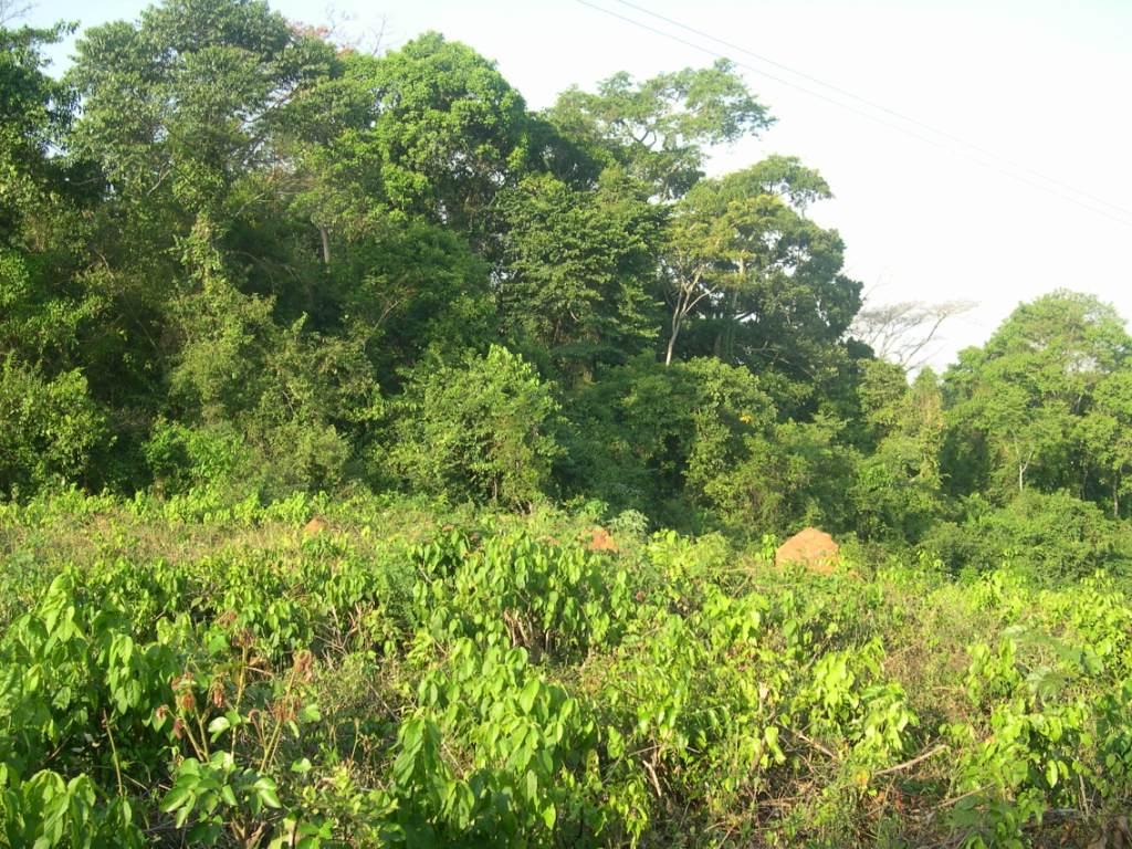 tree planting - nfa