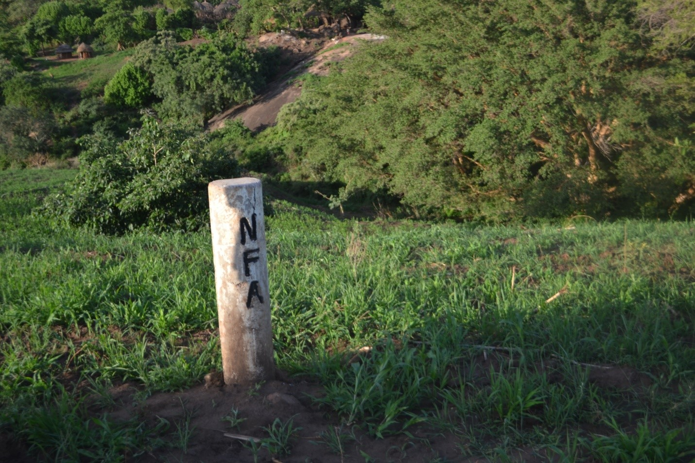 Morongole Central Forest Reserve boundary opened and marked with permanent pillars